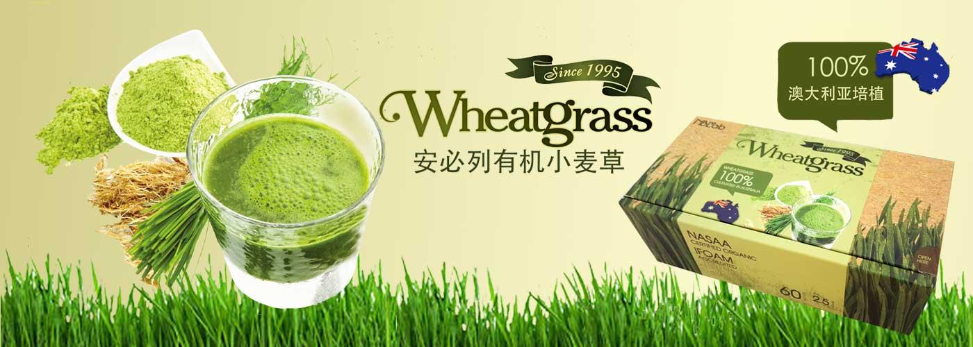 安必列有机小麦草